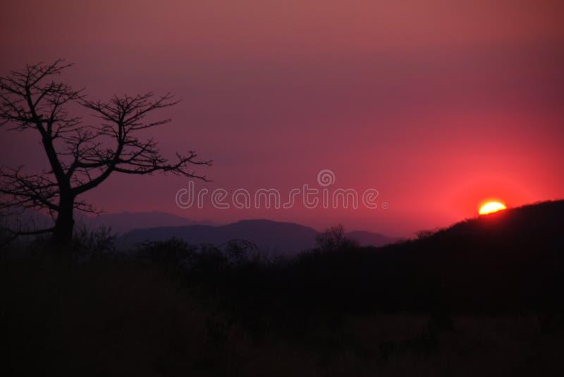 日落和猴面包树剪影在瑟拉山脉,安哥拉 库存照片