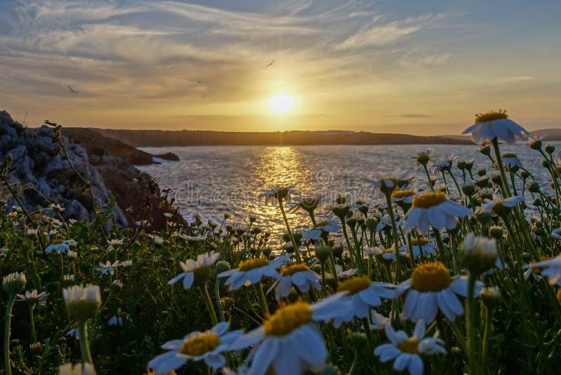 日落和花,阿雷纳尔D'en卡斯特尔,梅诺卡 图库摄影