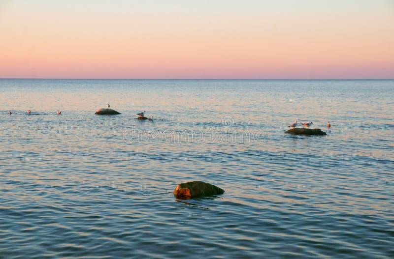 日落和风平浪静、风平浪静和海鸥 免版税库存图片