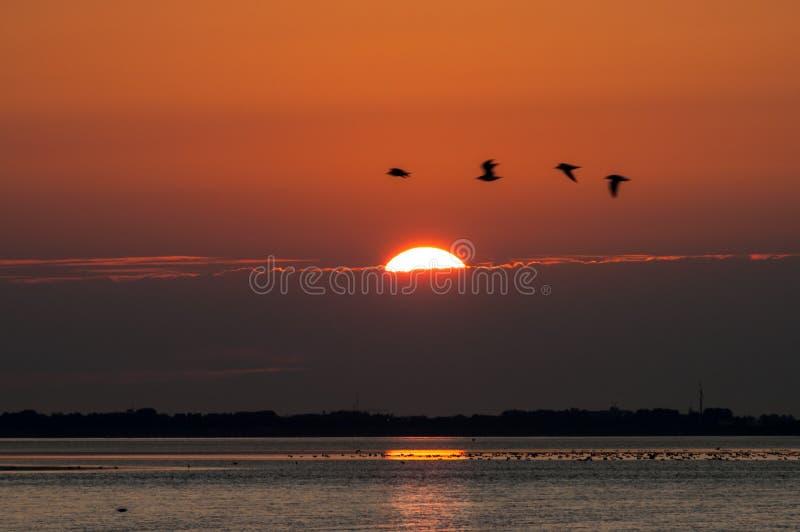 日落和飞鸟 免版税图库摄影