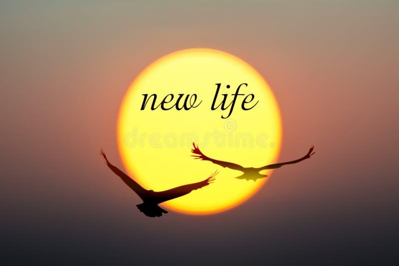 日落和鸟与新的生活文本 免版税库存照片
