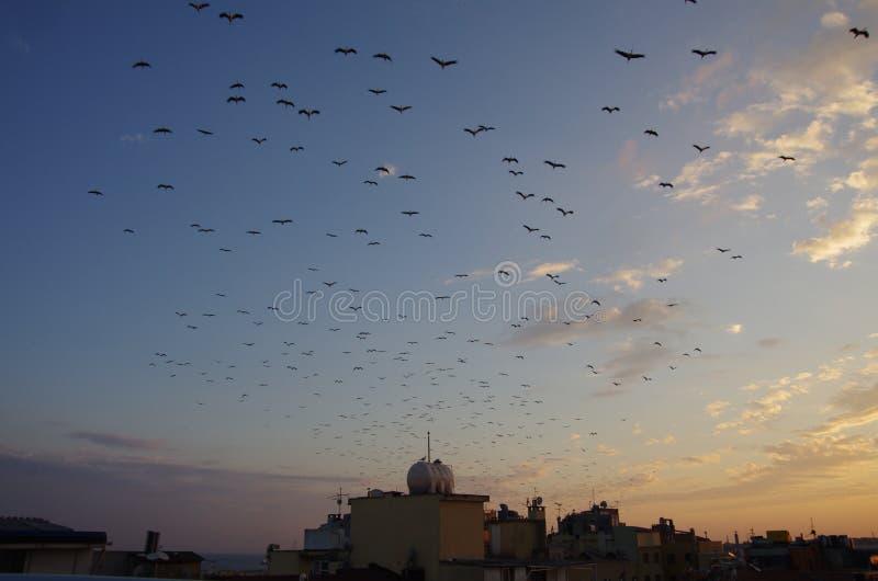 日落和鸟在伊斯坦布尔 免版税库存照片