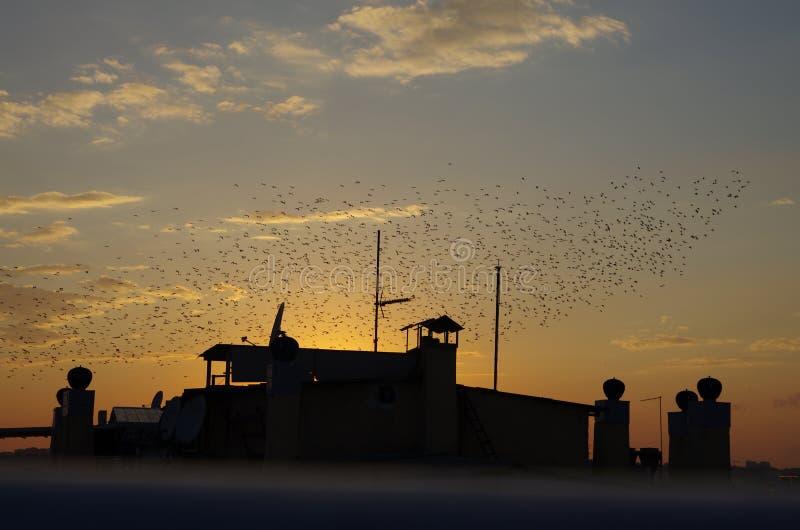 日落和鸟在伊斯坦布尔 免版税图库摄影