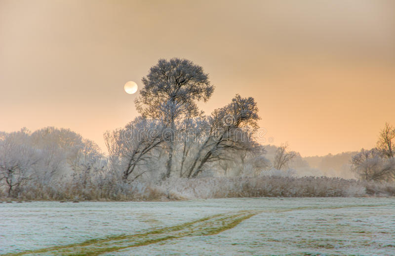 日落在与结霜的树的一个有雾的冬日 免版税库存照片