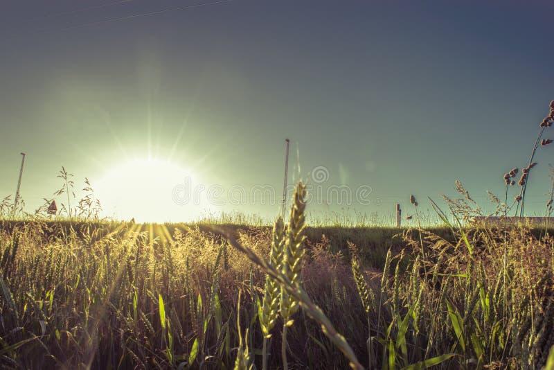 日落在丹麦 库存照片