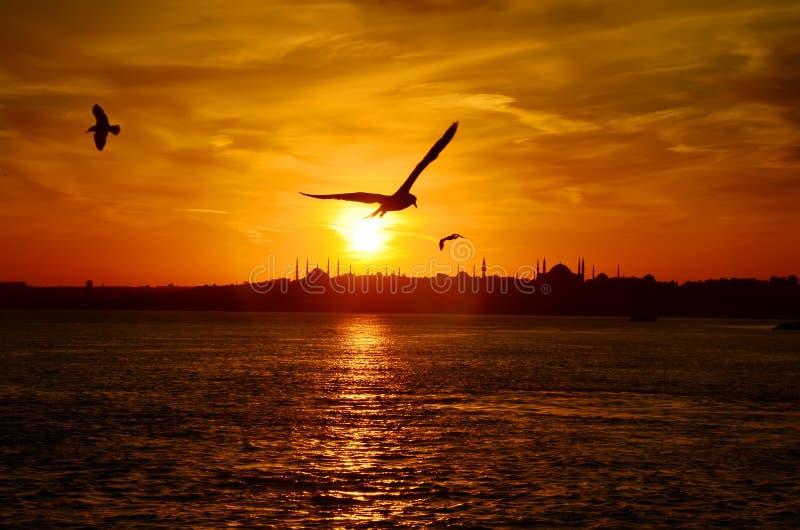日落在伊斯坦布尔,土耳其 从马尔马拉海的看法 图库摄影