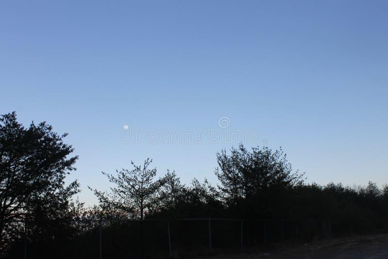 日落在公园和一个冷的冬天 免版税库存照片