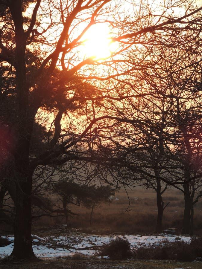 日落在希尔弗萨姆,荷兰 库存照片