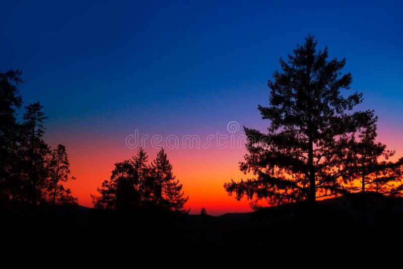 日落在有树剪影的优胜美地国家公园 库存图片