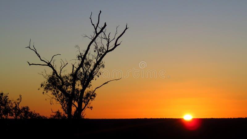 日落在有清楚的天空的澳洲内地 免版税库存图片