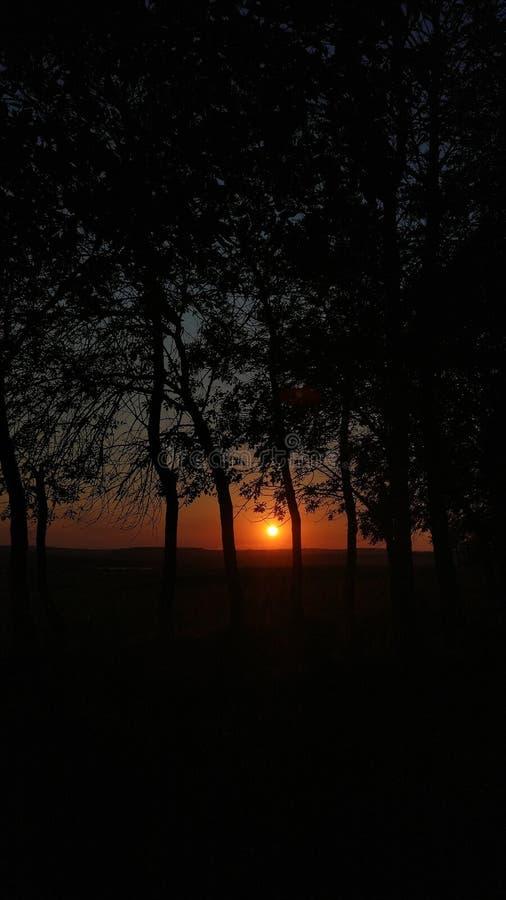日落在森林里,森林在晚上 免版税库存图片