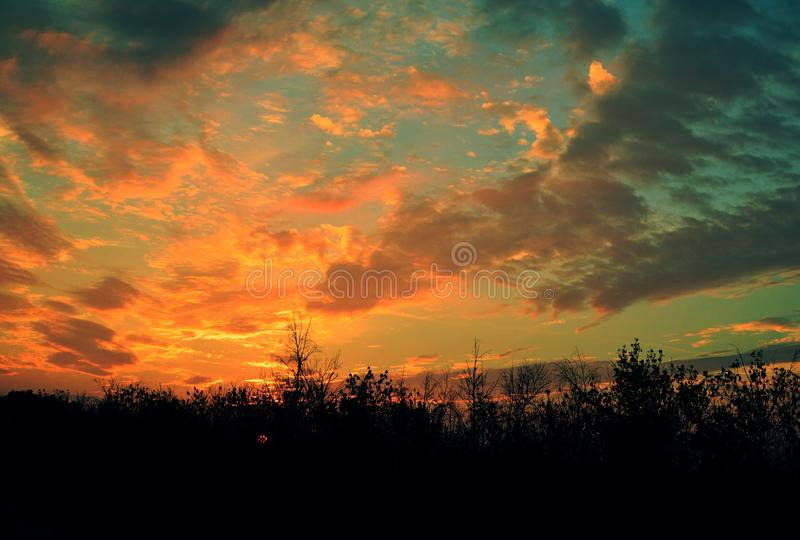 日落在森林里 图库摄影