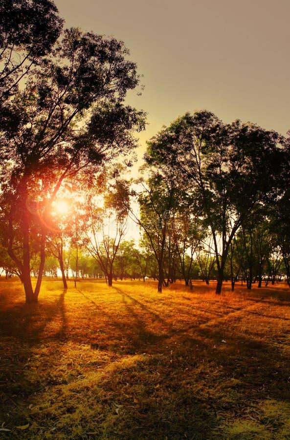 日落在森林 免版税库存照片