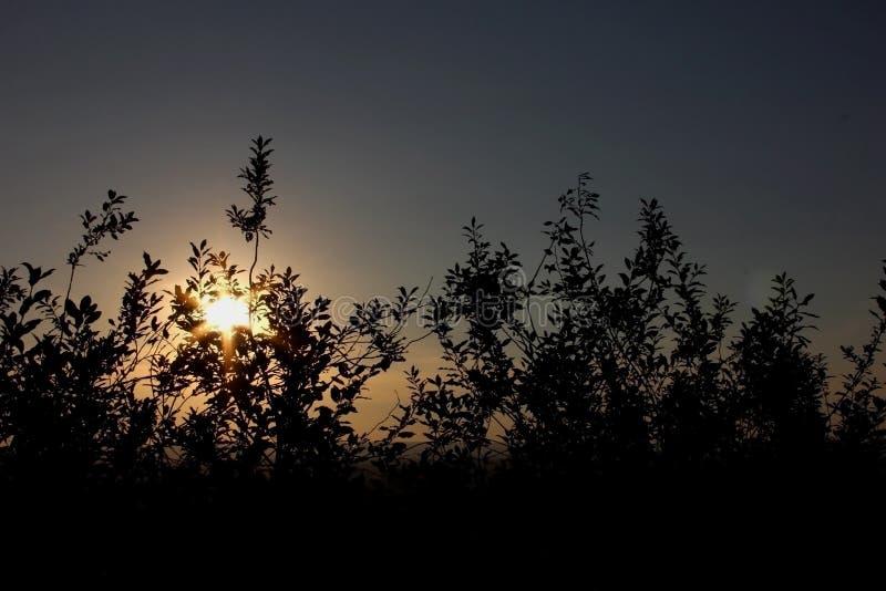 日落在植物中遮蔽灰色蓝色橙色天空梯度自然bac 免版税库存照片