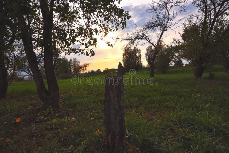 日落在苹果树 库存图片