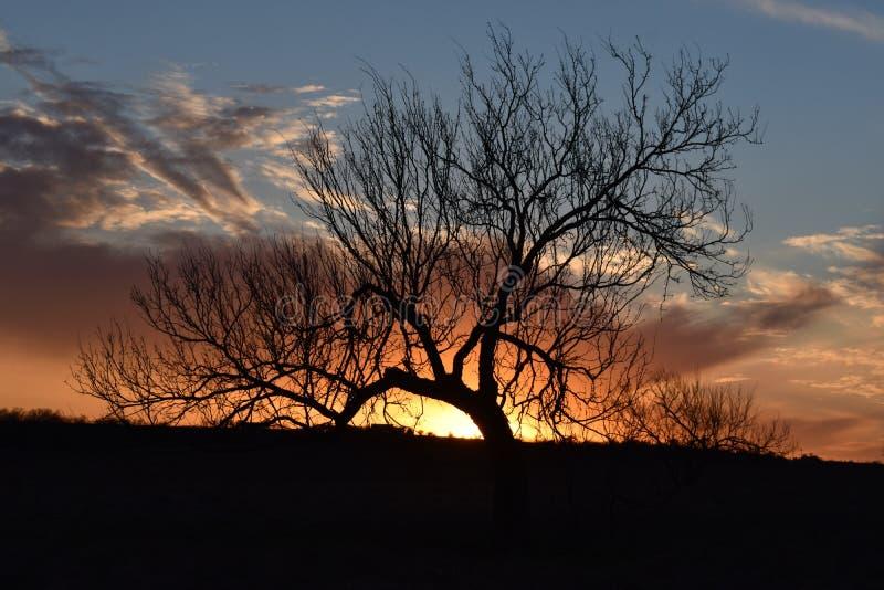 日落在Markum大农场路的沃思堡得克萨斯 库存图片