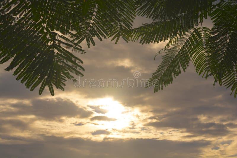 日落场面绿色叶子背景和剪影  免版税库存图片