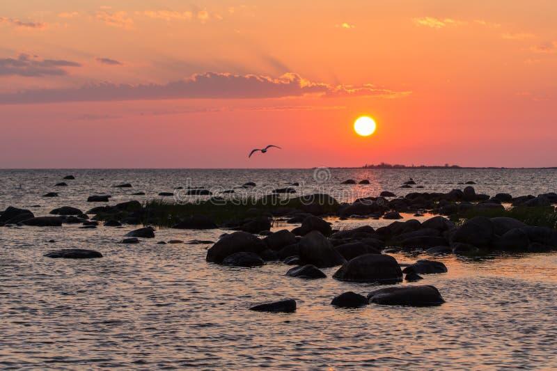 日落多岩石的海滩,平安的海,橙色天空 Kihnu,小海岛在爱沙尼亚 波罗的海,欧洲 自然环境背景 免版税库存图片
