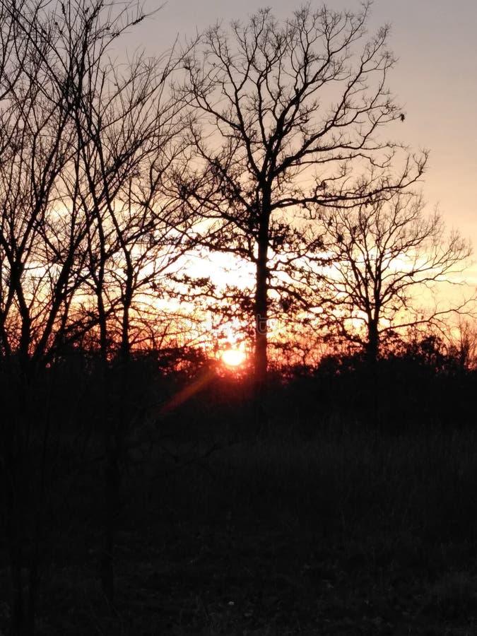 日落太阳树和更多 免版税库存图片