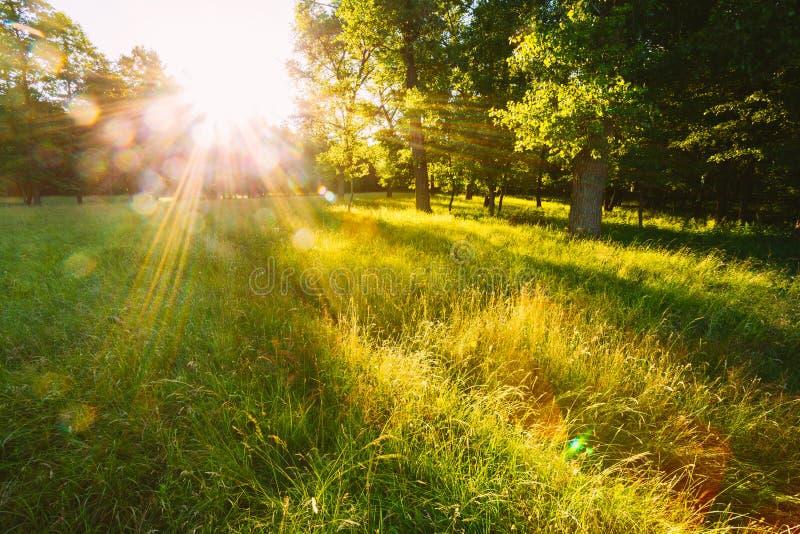 日落或日出在森林风景 与自然的太阳阳光 库存图片