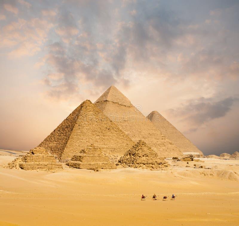 日落所有埃及金字塔骆驼遥远宽 免版税库存照片