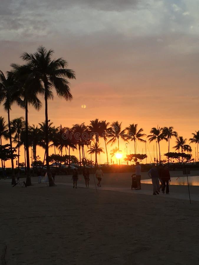 日落有棕榈树的檀香山夏威夷 库存照片