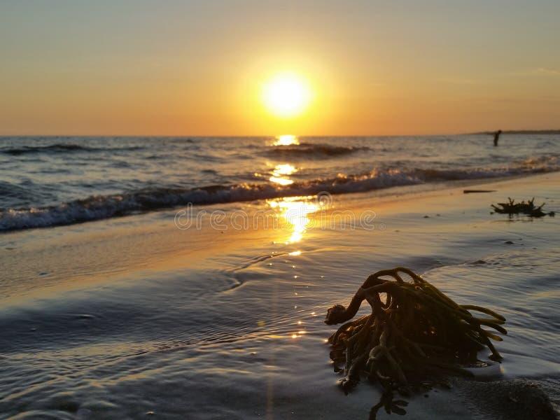 日落海海藻美好的夏天 免版税库存图片