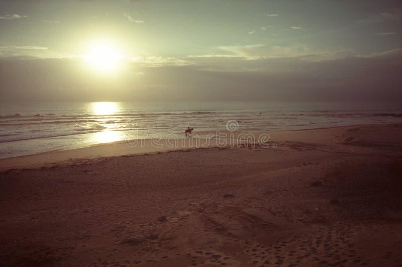 日落海滩马在大西洋含沙海岸的乘驾场面  库存图片