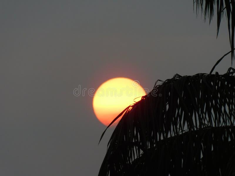 日落的一张美丽的照片从树的 免版税图库摄影