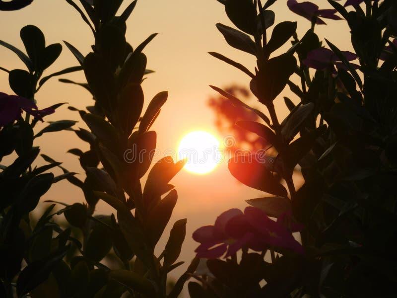 日落的一张美好的图片 库存图片