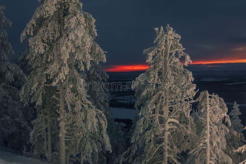 日落的冬天神仙的森林 库存照片