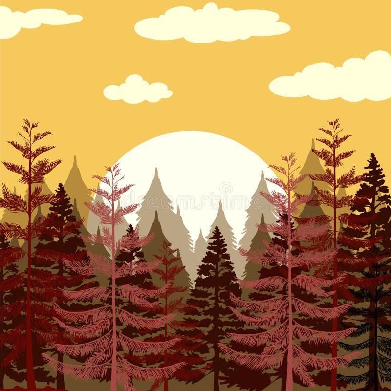 日落的杉木森林 库存例证
