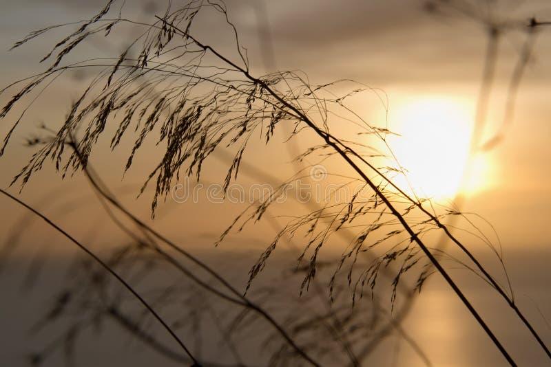 Download 日落的植物 库存照片. 图片 包括有 阳光, 欧洲, 日落, 海岸线, 火箭筒, 没人, 反映, 多云, 夜间 - 30334866