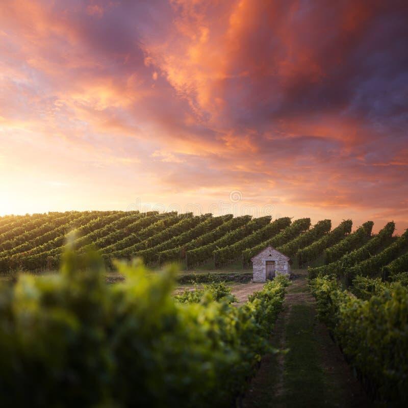 日落的法国葡萄园 免版税库存照片