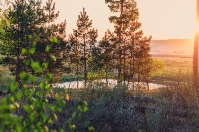日落的湖在绿色草甸和剧烈的云彩中的森林里 俄国自然美丽如画的夏天风景  库存照片
