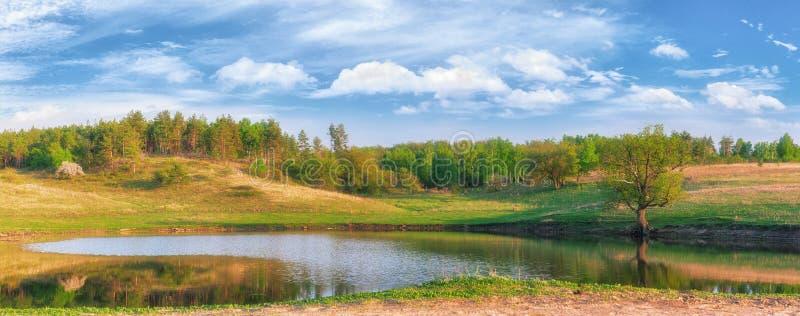 日落的湖在绿色草甸和秀丽中的森林覆盖 俄国自然美丽如画的夏天风景  免版税库存图片