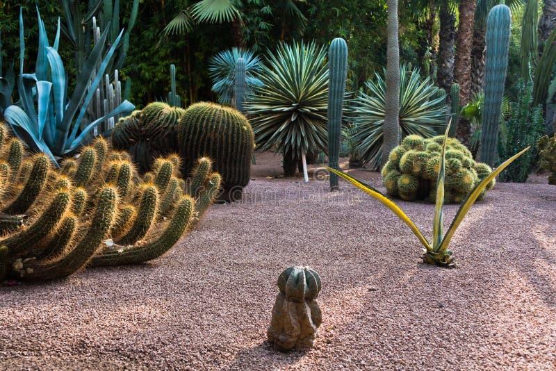 日落的由后面照的仙人掌植物, Majorelle庭院在马拉喀什,摩洛哥 免版税库存图片