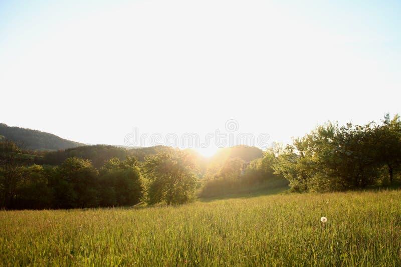日落的绿色草原 库存照片