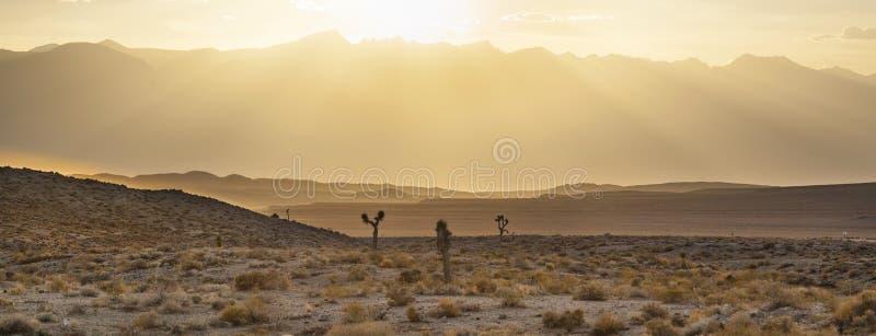 日落的美丽的丝兰植物 免版税库存照片