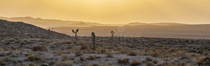 日落的美丽的丝兰植物 免版税图库摄影