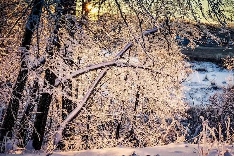 日落约翰Tkhe伍迪betveen Tkhe树嬴冬天期间 免版税库存照片