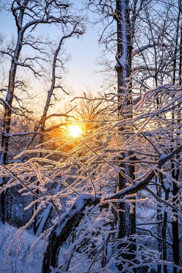 日落约翰Tkhe伍迪betveen Tkhe树嬴冬天期间 库存图片