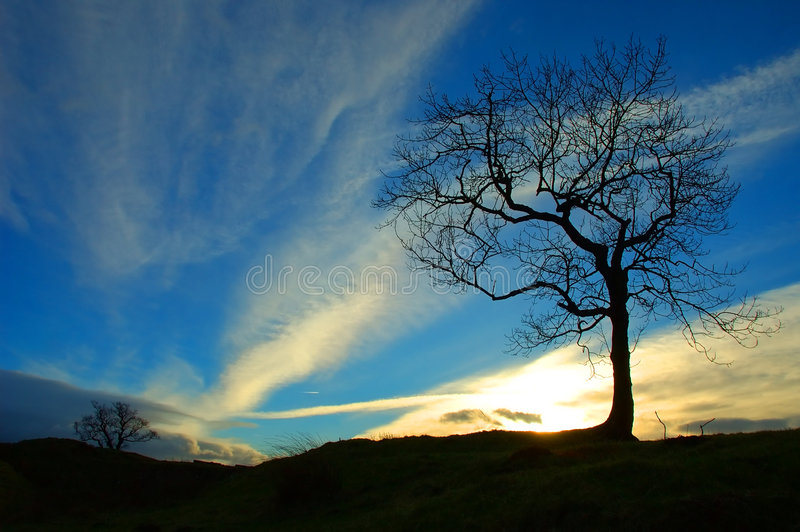 日落结构树 免版税库存照片