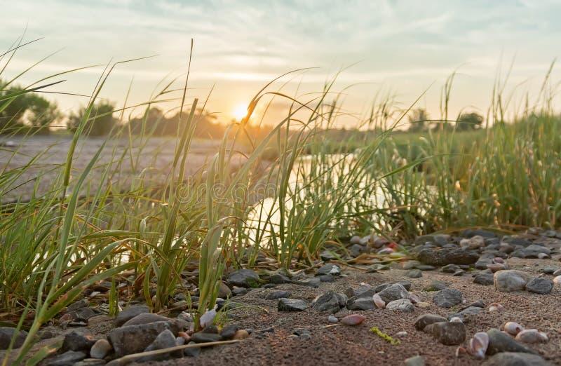 日落芦苇沼泽关闭视图 免版税库存照片