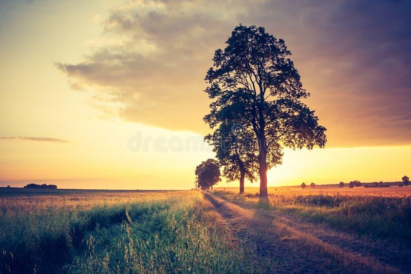 日落葡萄酒照片在树的 图库摄影