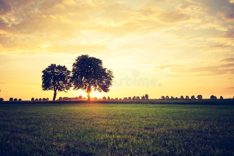 日落葡萄酒照片在树的 免版税库存图片