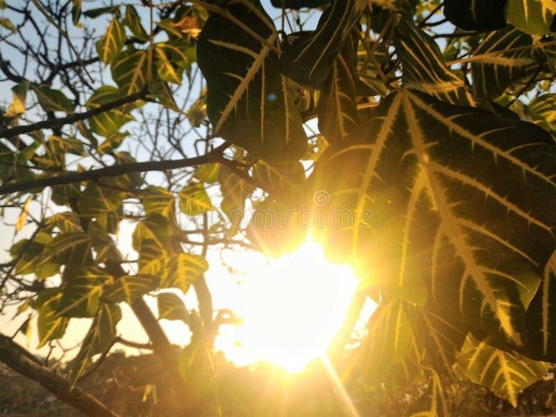 日落通过叶子 免版税库存照片