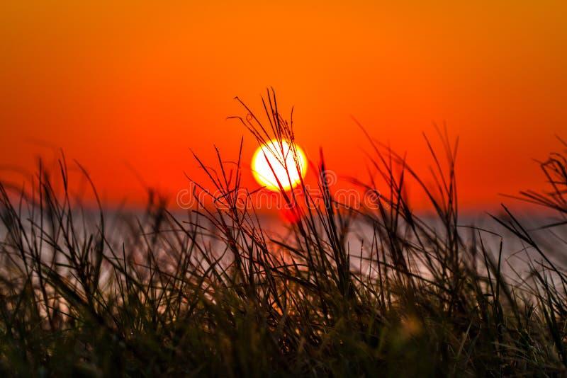 日落通过芦苇 免版税图库摄影