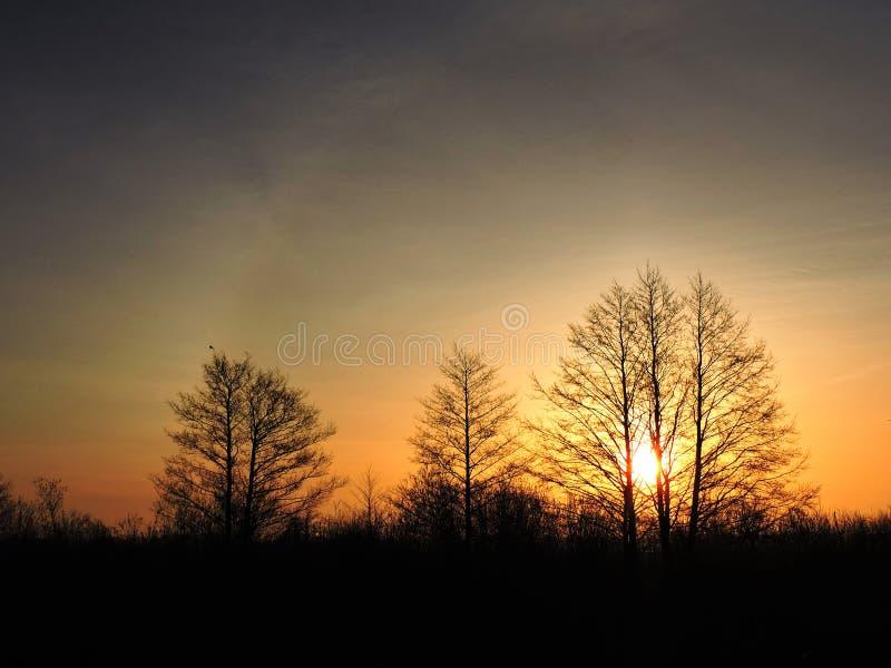 日落颜色上的树,立陶宛 库存图片
