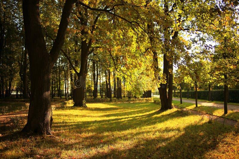 日落风景在城市公园 免版税库存图片